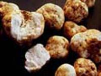 Italy suffers bad harvest of white truffles