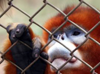 Zoo animals starve because of corruption