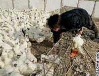 Bird flu detected in southern Japan identified as virulent H5N1 strain