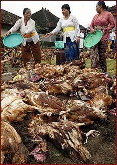 France detects H5 bird flu virus on turkey farm