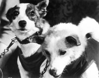 30 Soviet mongrel dogs paved the way into space for entire mankind