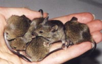 Starbucks store fined in London for being infested with mice