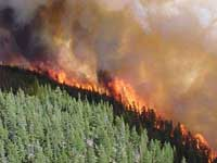 EU: July forest fires among worst on record