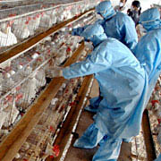 France confirms EU's first H5N1 bird flu outbreak in commercial poultry