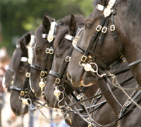 Runaway Horses Trample Through Crowd in Iowa, 1 Killed