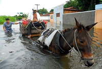 Heavy Rains Kill at Least 95 in Brazil