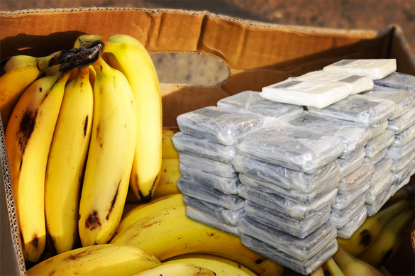 Bananas with 18 kilos of cocaine delivered to St. Petersburg. 59966.jpeg