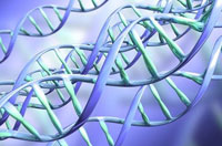 How Did DNA Make My Body?