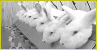 European Commission, industries against animal testing