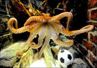 Spain To Win World Cup 2010, Octopus Paul Says