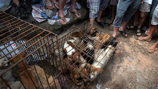 Dog farms: South Korea's inhuman and shameful cruelty and brutality. 60991.jpeg