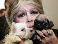 Brigitte Bardot Strains Nerves to Save Animals from Nepal's Massacre