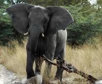 Elephant  kills herd's matriarch in Israeli nature park