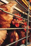Chinese scientists reveal earliest human case of bird flu
