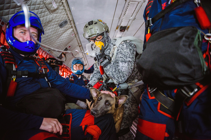 Siara, a skydiving dog