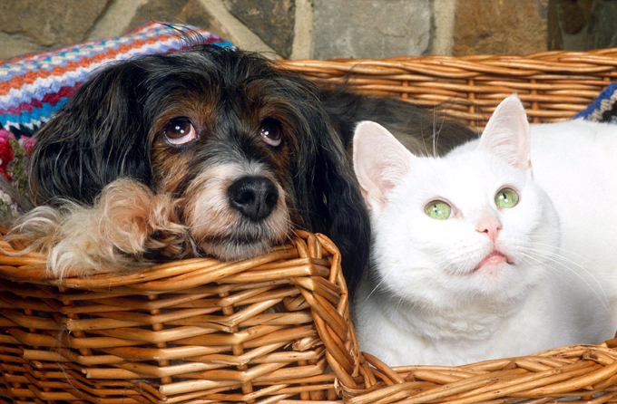 It s raining cats and dogs Adorable pictures of our most beloved pets cats_dogs
