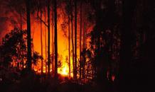 Tragedy in Portugal: 62 die in forest fire