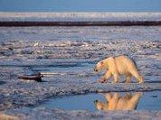 Arctic sea ice hit record low in 2010, says study