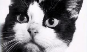 First cat in space to be immortalised
