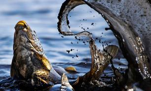 Mankind destroys animal kingdom with enormous velocity