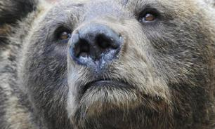 In Tomsk region, villagers suffer from mass poisoning after eating smoked bear