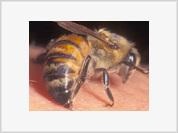 Bee venom successively treats men's most precious organ
