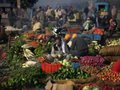 Africa...Organic Produce: Back to Basics