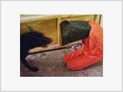 'Real cartoons' of Abu Ghraib tortures infuriate US administration