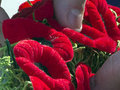 What we truly learned from Great War and  absurdity of Remembrance Day