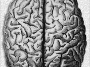 Scientists are about to unravel the main mystery of the brain