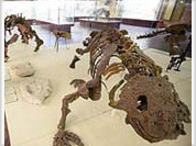 Russian scientists pick up the trail of dinosaurs