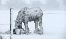 Yakutia residents slaughter animals because of snow disaster