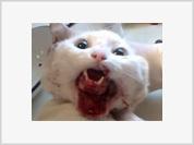 Cat gets its jaw sewn