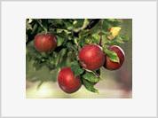 The Selfish Apple Tree