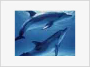 Dolphins speak the language of creatures living on Jupiter?