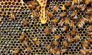 Europe needs to take urgent measures to save its bees before it's too late