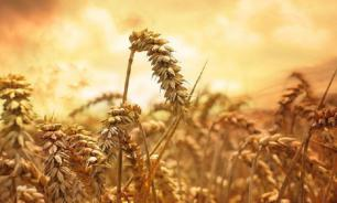 Russia's wheat harvest crushes US farmers