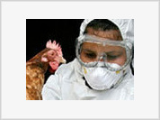 Young Egyptian woman falls victim to H5N1 virus