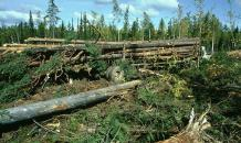 Russia to protect its  green shield  not to suffocate