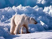 Russia stands strong to defend Arctic regions from foreign influence