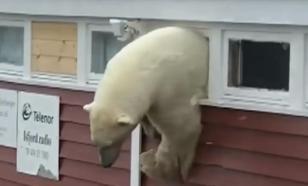 Polar bears invade Arctic archipelago, chase locals
