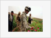 Afghanistan: The Perfect Storm of Drugs and Terrorism
