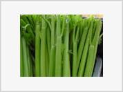 Arousing qualities of celery easily substitute Viagra