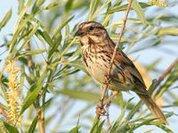 Do birds have personalities?