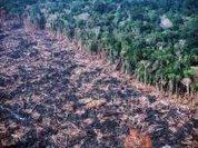 Murder in the Amazon