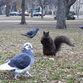 Furious squirrels attack stray dog and tear it to pieces