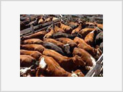 Moscow concerned over Argentina's decision to cut beef exports