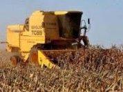 Transgenic grains again scare Europe