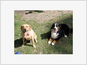 Friendship between man and dog rests on parental instincts