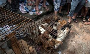 Reader Discretion: The slaughter of dogs in Yulin, China